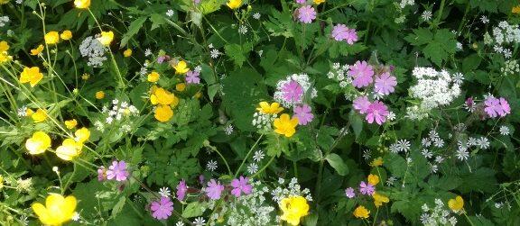Blumenwiese © TVB Mariazeller Land/Digruber