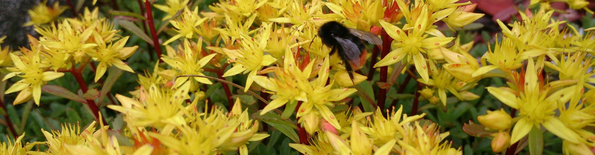 Sommerblumen, ©TVB Mariazeller Land