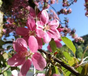 Frühlingsblumen, © TVB Mariazeller Land