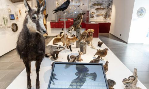 Naturkundemuseum Mariazell 1 © Fred Lindmoser