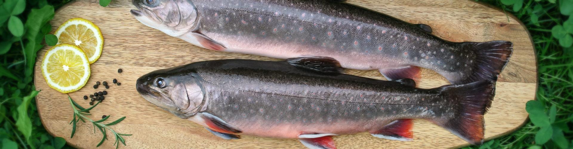 Fisch, © decleva's alpenfisch